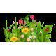 Квітковий сад